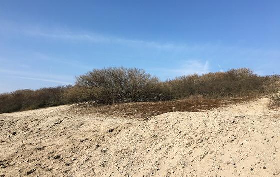 Ploggen 12 Maart 2016: Wandelen door de duinen